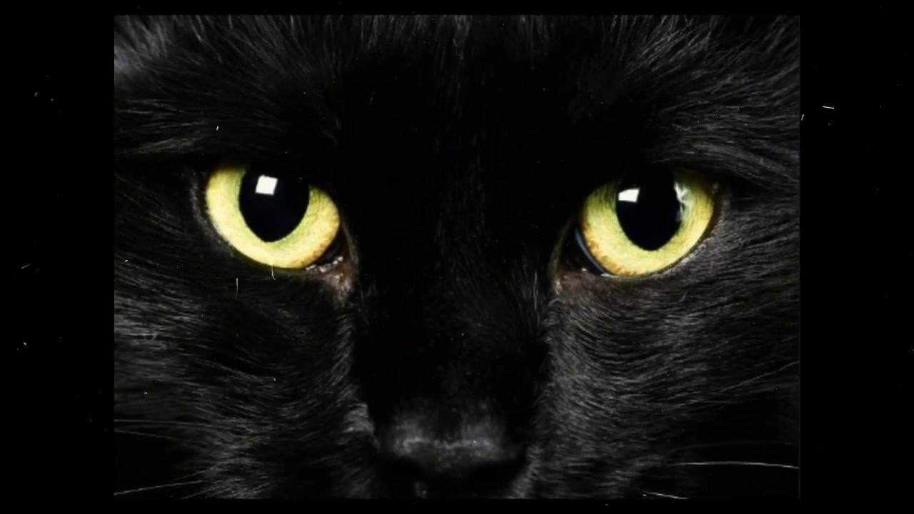 Mitos Tentang Kucing